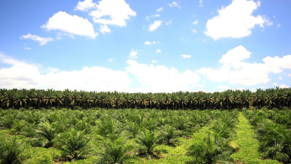 Pelatihan Legal Aspect of Palm Oil Plantation
