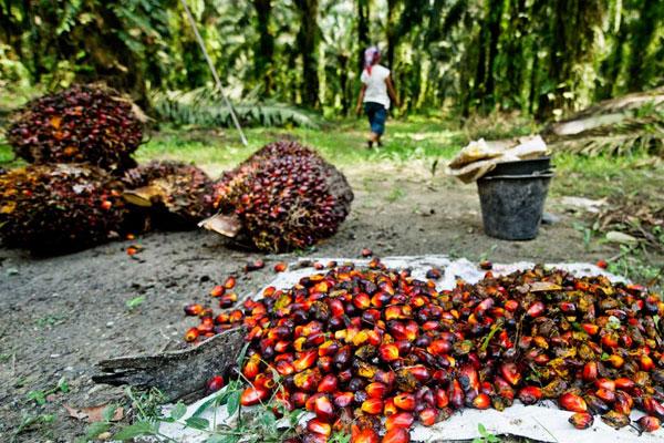 Pelatihan Palm Oil Plantation Business and Legal Forum